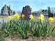 Photography By Heather Shade: Headstones & Daffodils